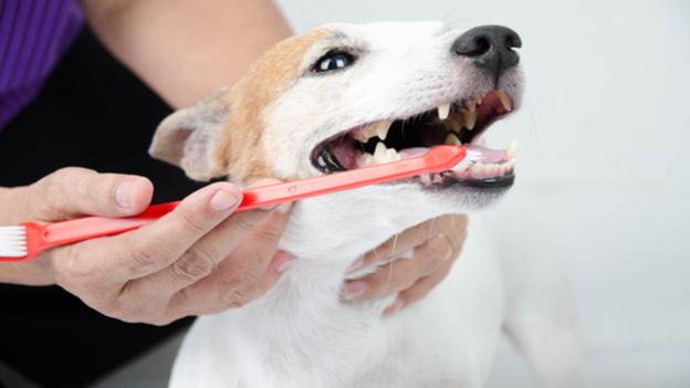 dog dental hygiene tips from cascade pet hospital in shoreline wa